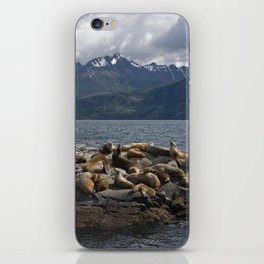 Sea Lions iPhone Skin