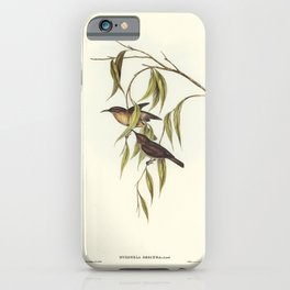 Baudins Cockatoo (Calyptorhynchus Baudinii) illustrated by Elizabeth Gould (1804-1841) for John Goul iPhone Case
