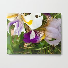 Fortnight lily and Iris Metal Print