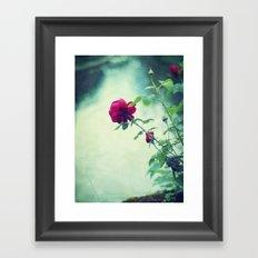 A rose is a rose. Framed Art Print