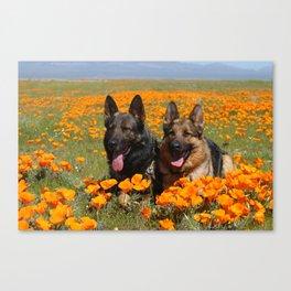 German Shepherds, California Poppy Fields Canvas Print