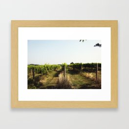 Vineyard Framed Art Print