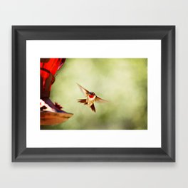The Hummingbird Framed Art Print