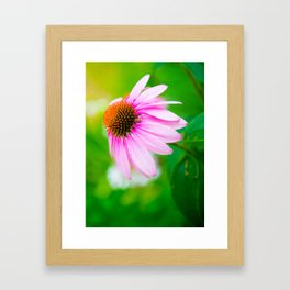 Looking For The Perfect Light Framed Art Print