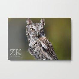 Young Owl Metal Print