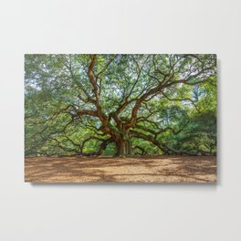 Angel Oak - Ancient Tree on Johns Island South Carolina Metal Print