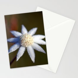 Not So Lesser Flannel Flower Stationery Cards