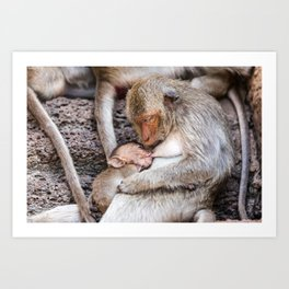 Monkeys of Thailand Art Print