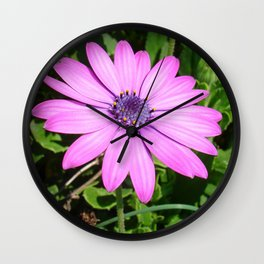 Single Pink African Daisy Against Green Foliage Wall Clock