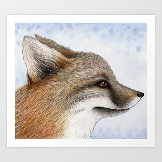 Grey Fox Art Print
