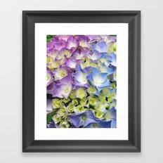 AZISAI/紫陽花 Framed Art Print