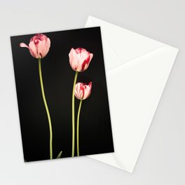 Old-Master style pink tulip stems on black Botanical photograph print Stationery Cards