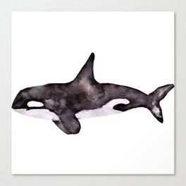 Watercolor Orca Killer Whale Canvas Print