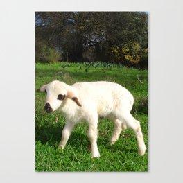A Newborn Lamb Finding Its Feet Canvas Print