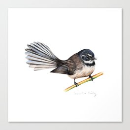 New Zealand Fantail Canvas Print