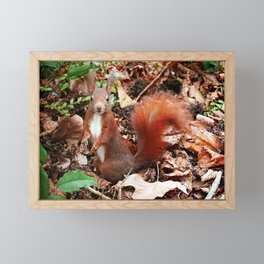 Do you have nuts for me? Framed Mini Art Print