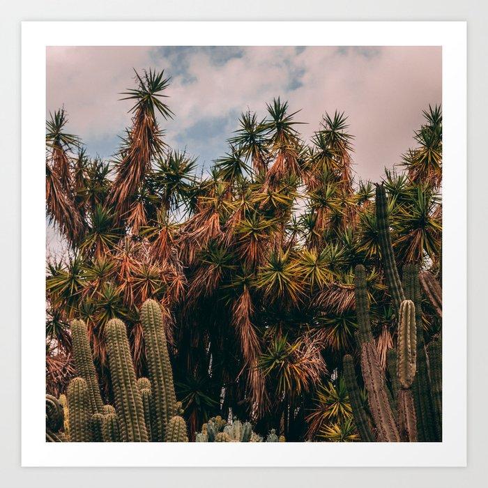 Cactus_0016 Art Print