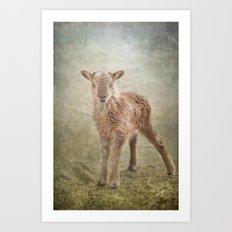 Baby Soay Sheep Art Print