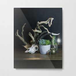 Succulents and Skull, Still Life Metal Print