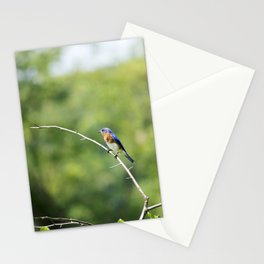 Longwood Gardens - Spring Series 240 Stationery Cards