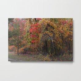 Evocative Autumn Metal Print