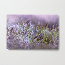 Morning dew on grass Metal Print