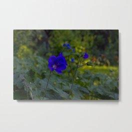Summer Purple flowers Metal Print