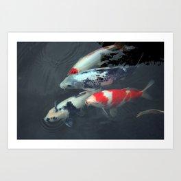 Swimming Koi Art Print