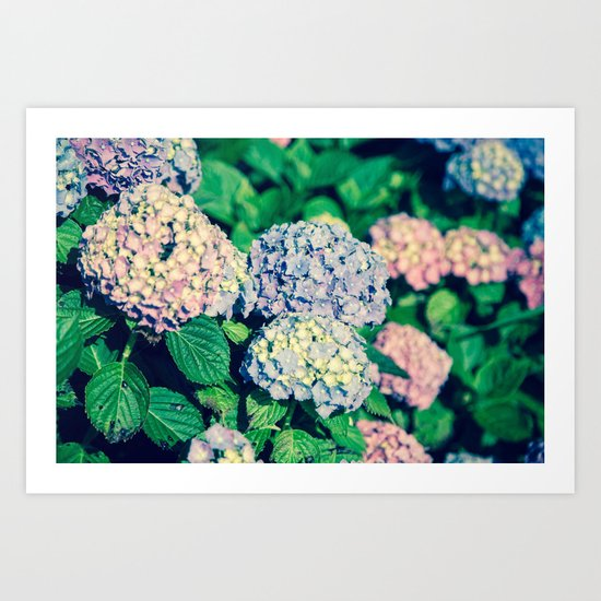 Purples Art Print