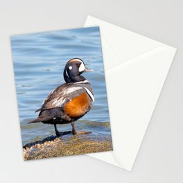 Beautiful Harlequin Duck on the Rocks Stationery Cards