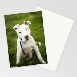 Pit Bull Puppy Stationery Cards