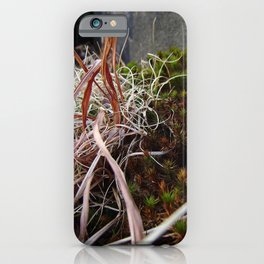 Dry Grass, Moss, and Rock iPhone Case