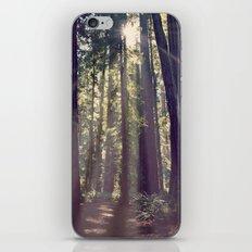 Redwoods Hike iPhone & iPod Skin