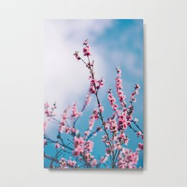 Pink Floral in Blue Sky (Color) Metal Print