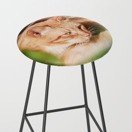 Cats Bar Stool