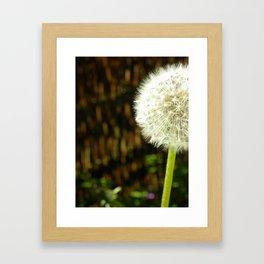 Dandelion II Framed Art Print