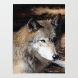 The Eyes of a Wolf Poster