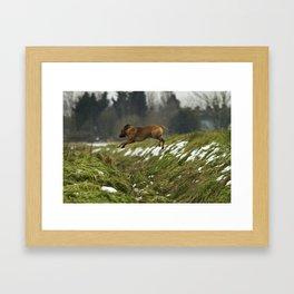 Super Dog Framed Art Print