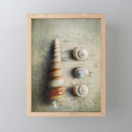 Shells on Beach wood. Framed Mini Art Print