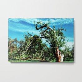 Apple Orchard 2 // Upstate New York Metal Print