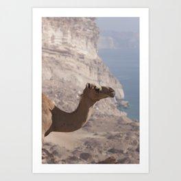 Dhofari Camel Art Print