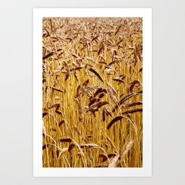 High grain image Art Print