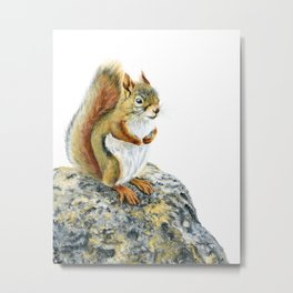 Bright-eyed and Bushy-tailed by Teresa Thompson Metal Print