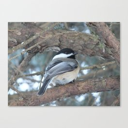 Chickadee dee dee Canvas Print
