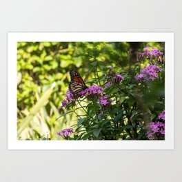 Monarch's Flower Art Print