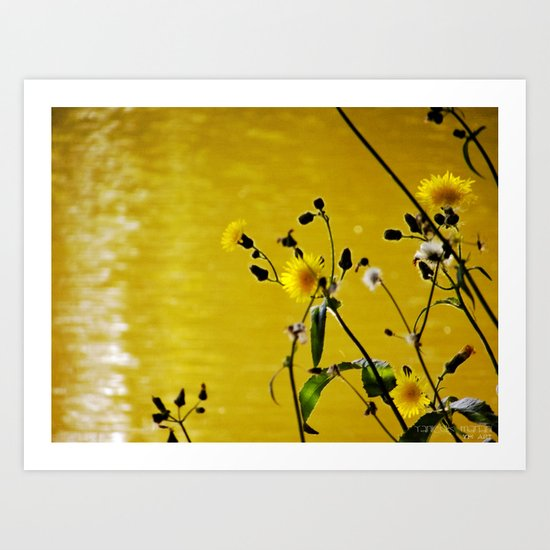 Kissed by the sun Art Print