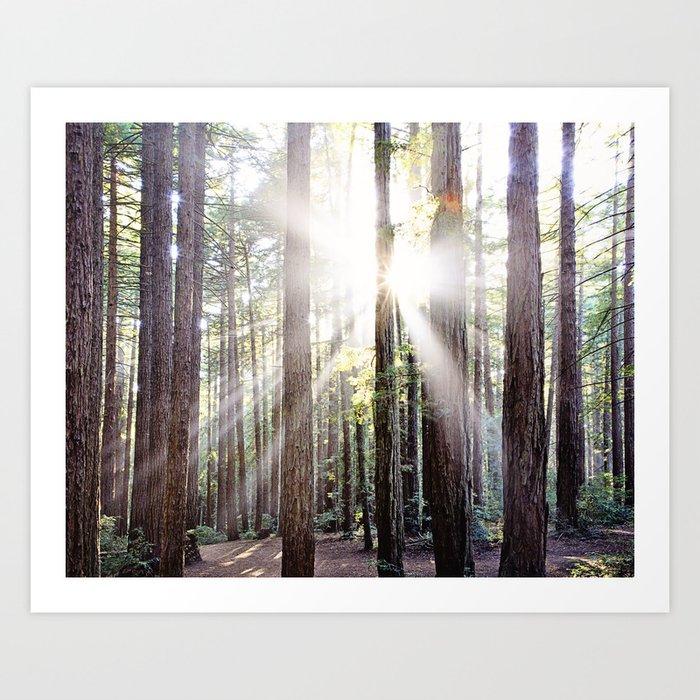 Sunburst Through the Redwoods Art Print