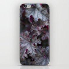 Purple Leaves iPhone & iPod Skin