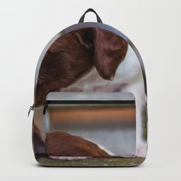 Cute Puppies (Color) Backpack