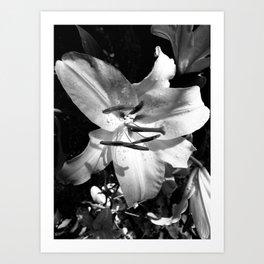 Orchid 2 Art Print